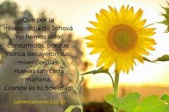 las-misericordias-de-Dios-se-renuevan-cada-manana